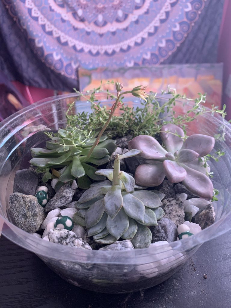 Terrarium plant blue green purple