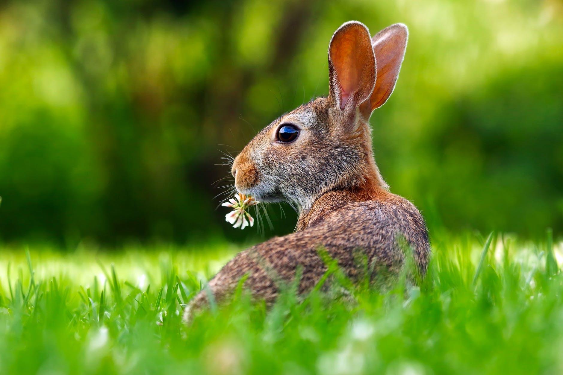 close up of an animal eating grass